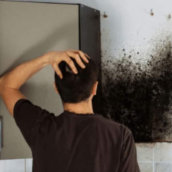 Antipelėsiniai dažai sienoms ir luboms prieš pelėsį